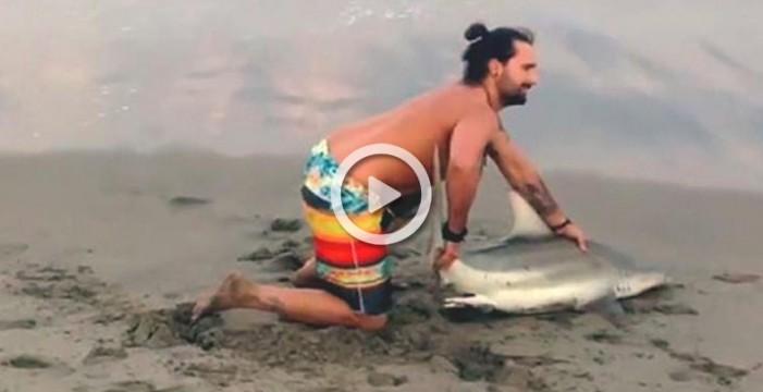 Más estupidez humana: saca un tiburón del mar para hacerse fotos