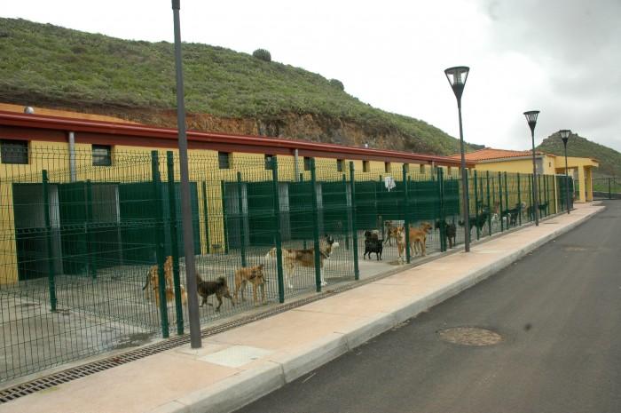 El albergue para animales abandonados se ubica en Finca España, en La Laguna. / F. P.