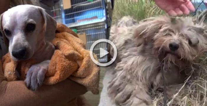 Salvan a un perro que vivió siempre en la calle