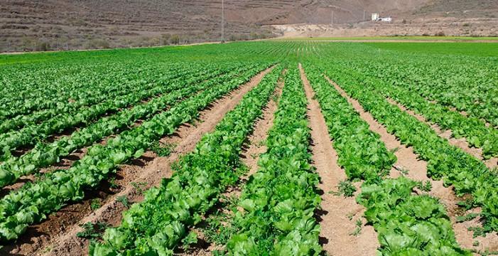 Las desaladoras del Sur permitirán liberar recursos para la agricultura