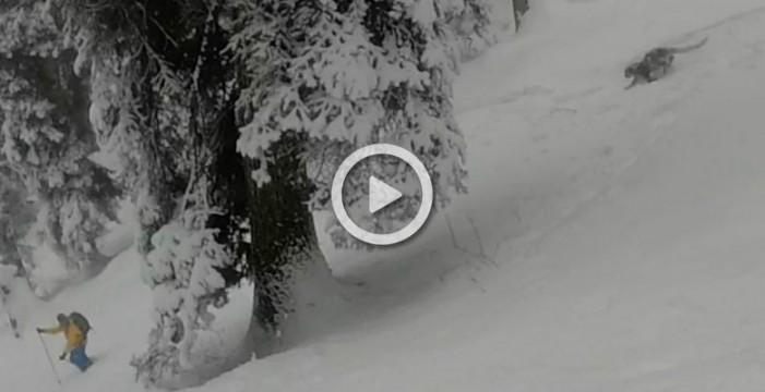 El extraordinario encuentro de unos esquiadores con un leopardo de las nieves