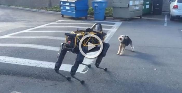 Perro robótico vs perro animal